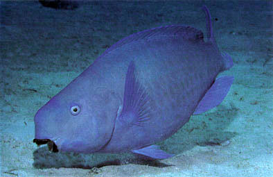 www viel Fisch ca